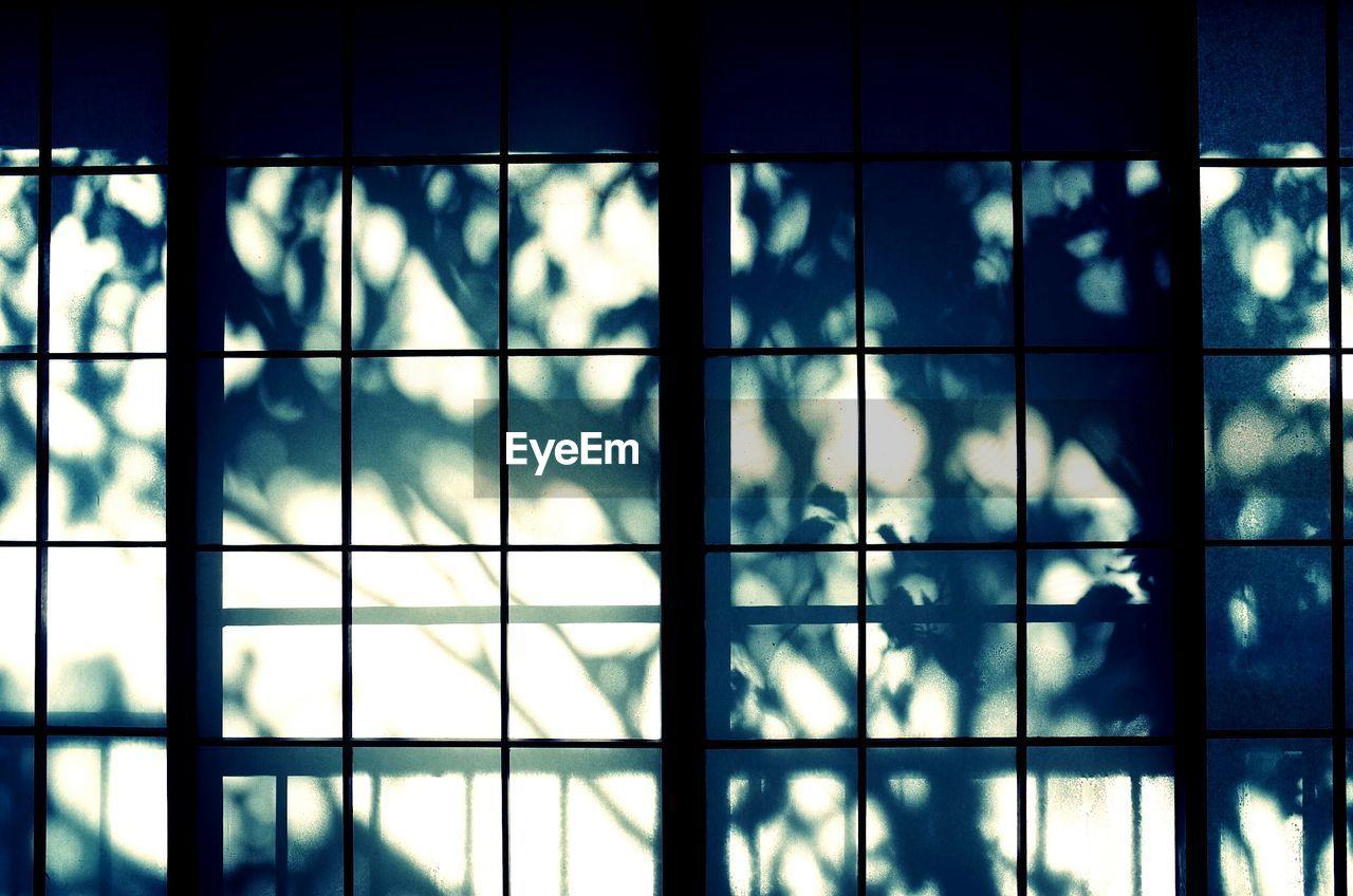 Trees Shadow On Window