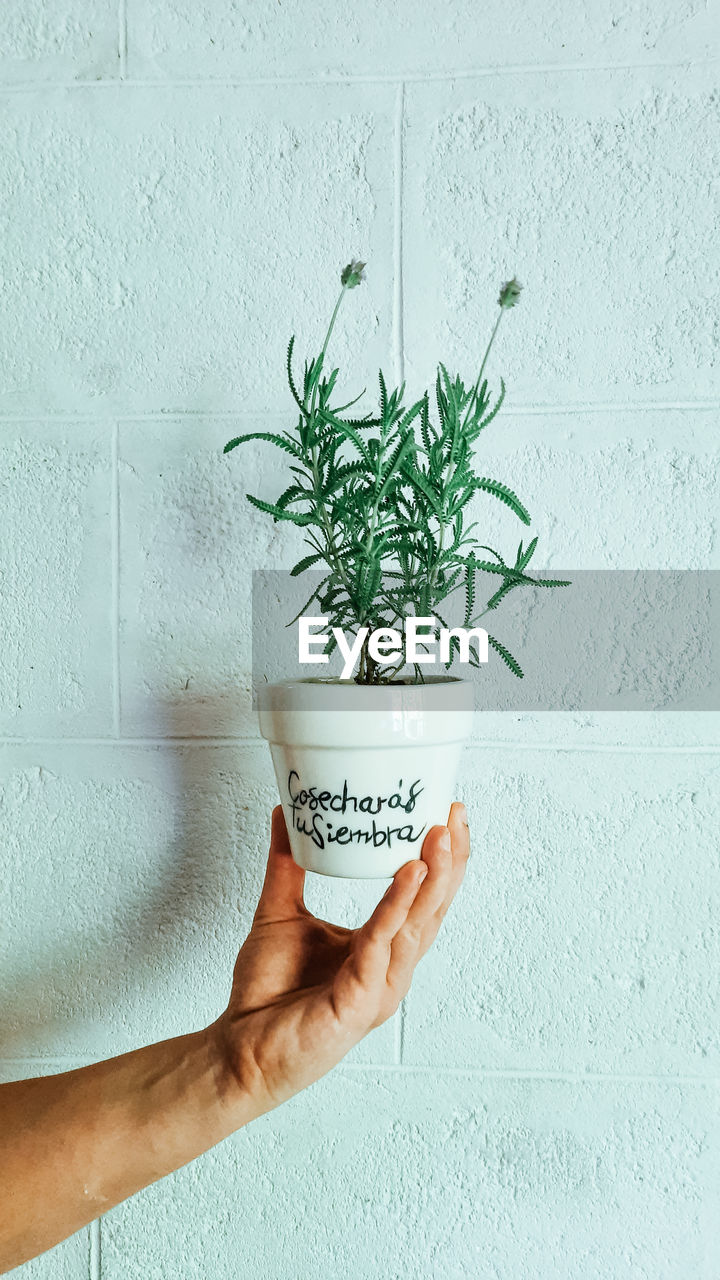HUMAN HAND HOLDING POTTED PLANT AGAINST WALL