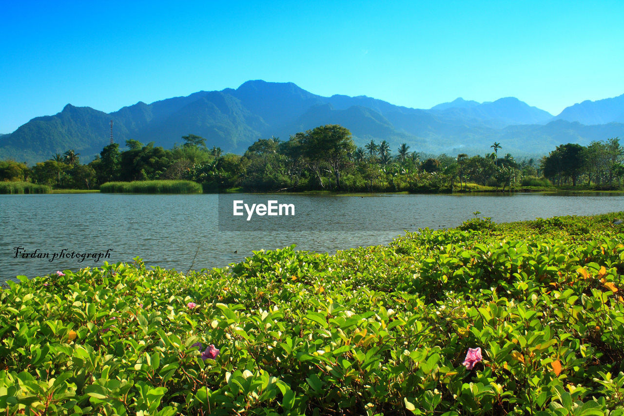 mountain, nature, lake, growth, beauty in nature, plant, scenics, mountain range, tree, outdoors, water, tranquility, tranquil scene, no people, day, landscape, green color, clear sky, flower, sky