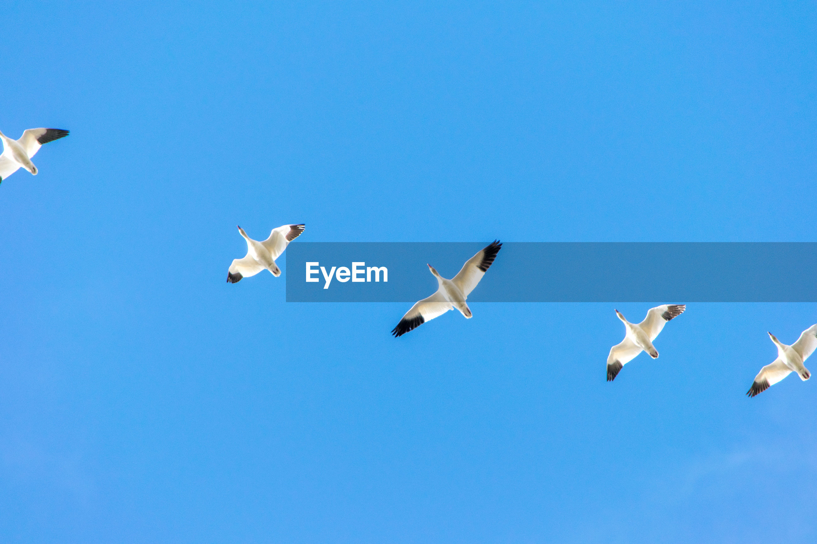 LOW ANGLE VIEW OF SEAGULLS