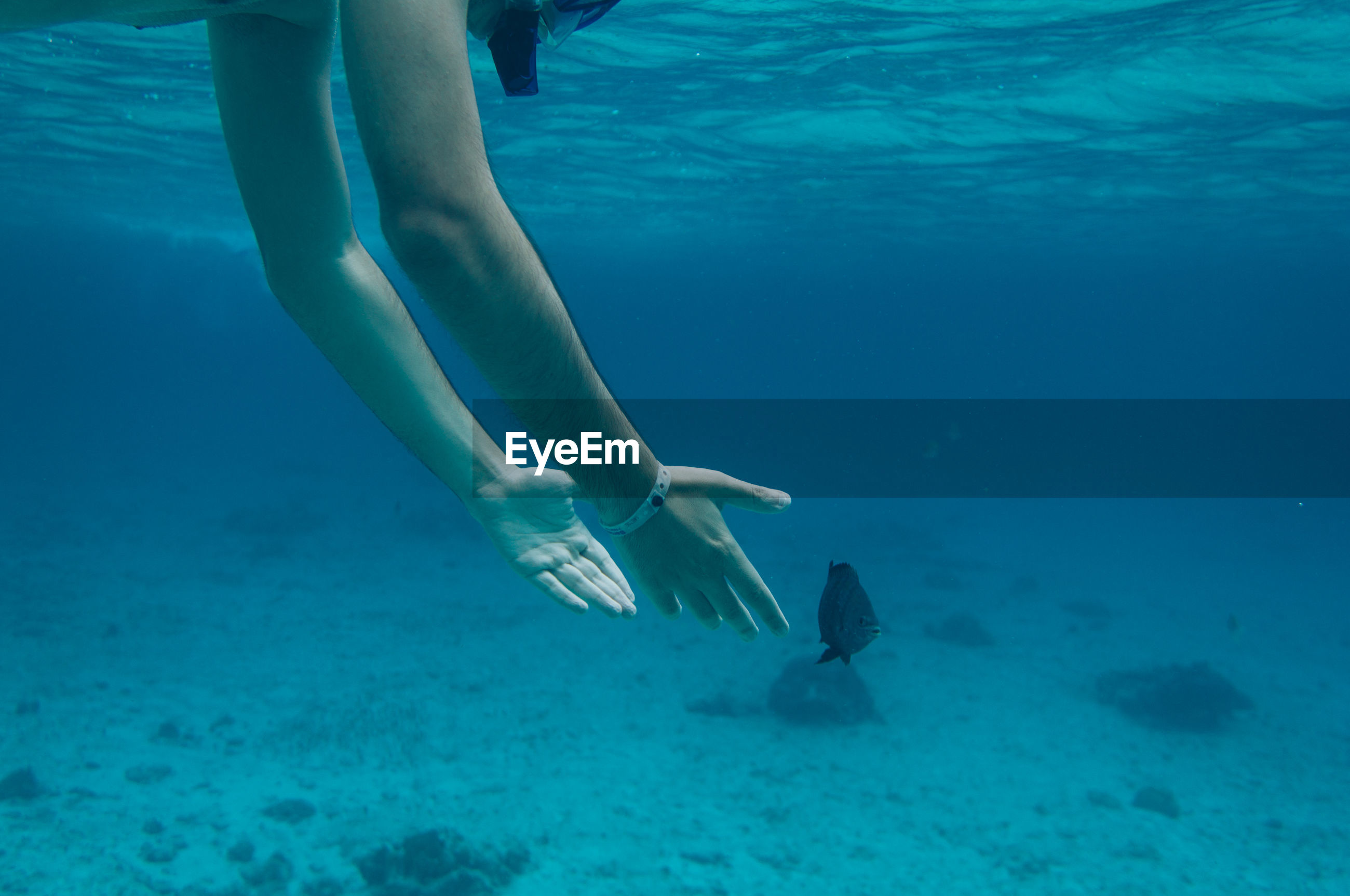 Cropped hands of man reaching for fish while swimming undersea