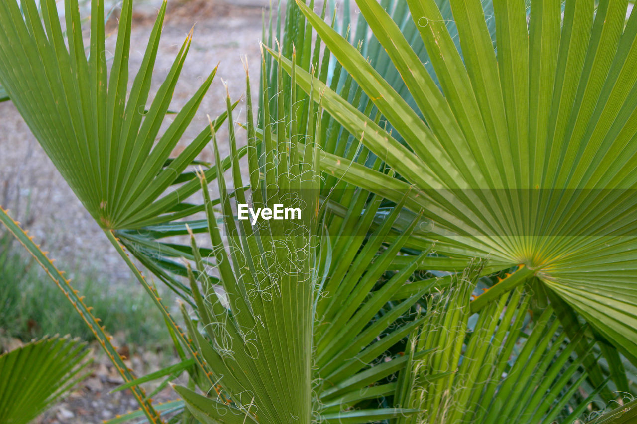 green color, growth, nature, plant, day, close-up, leaf, focus on foreground, no people, outdoors, freshness, beauty in nature, frond, fragility