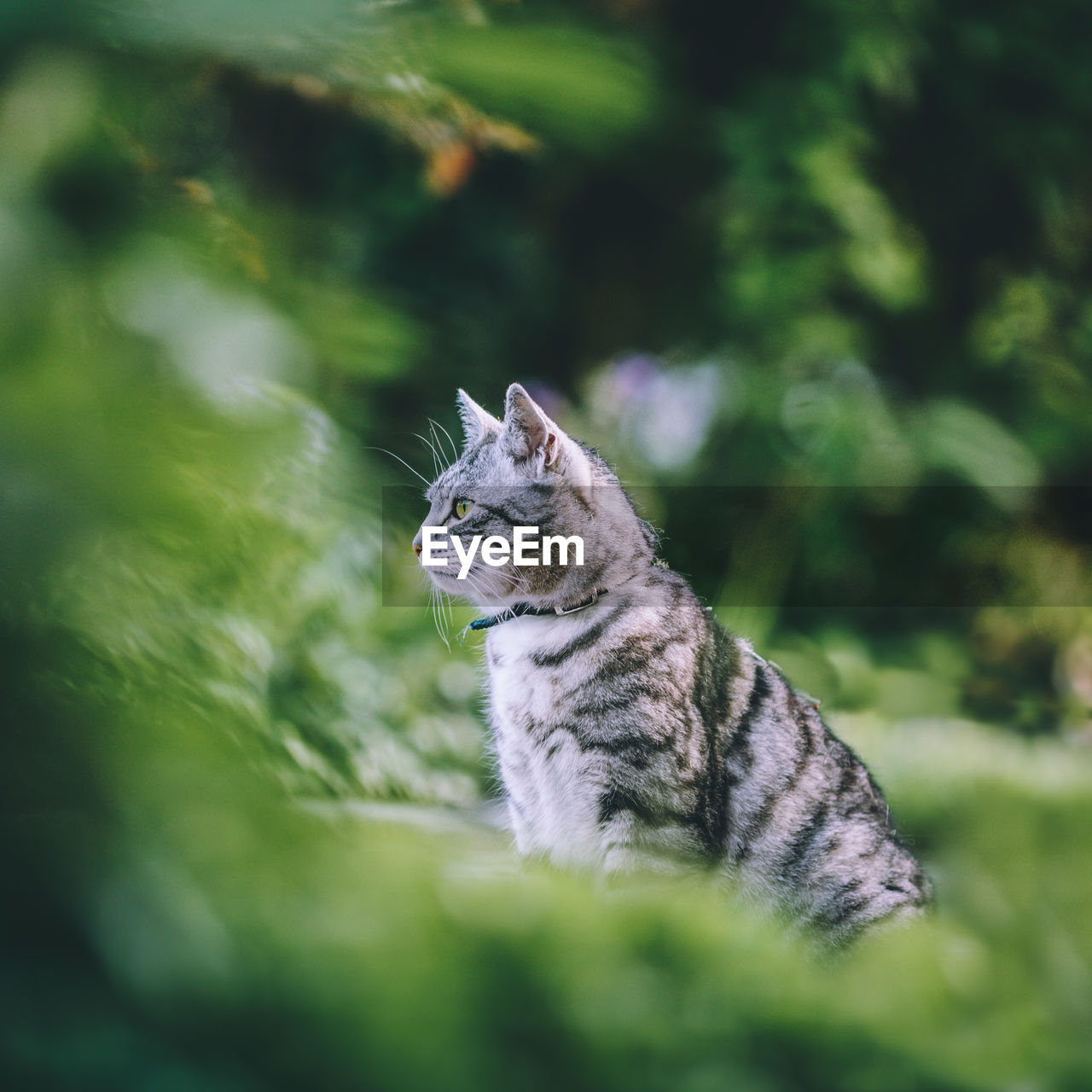 View of cat in forest