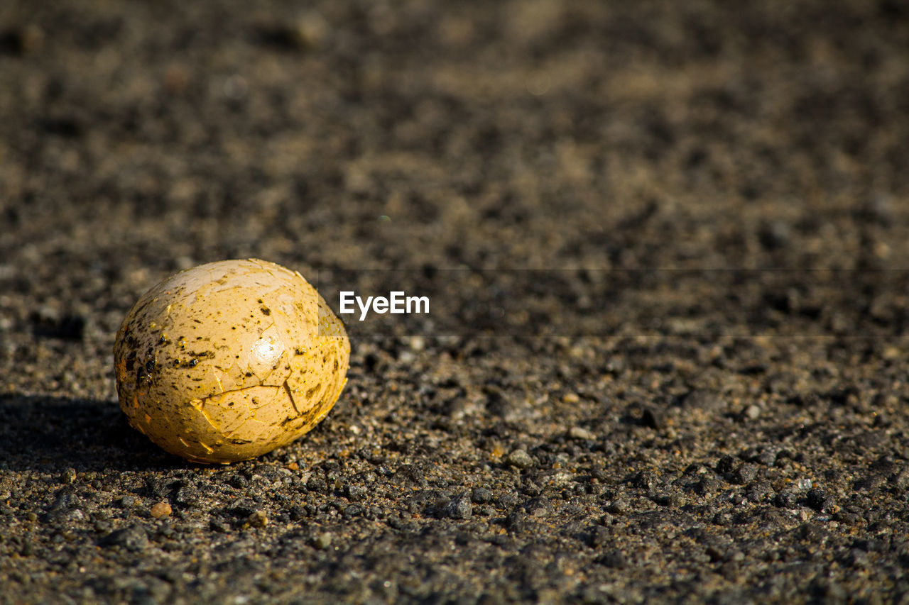land, selective focus, no people, single object, close-up, food, sand, dirt, nature, day, food and drink, sunlight, field, outdoors, focus on foreground, beach, egg, textured, ball, still life