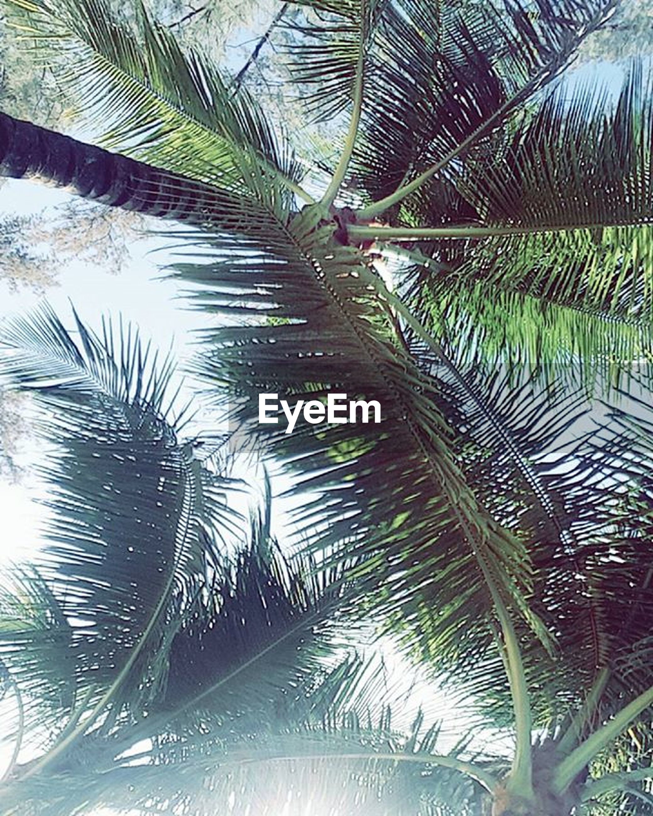 growth, palm tree, tree, leaf, nature, low angle view, palm leaf, plant, green color, beauty in nature, branch, tranquility, day, outdoors, sunlight, no people, full frame, pattern, backgrounds, natural pattern