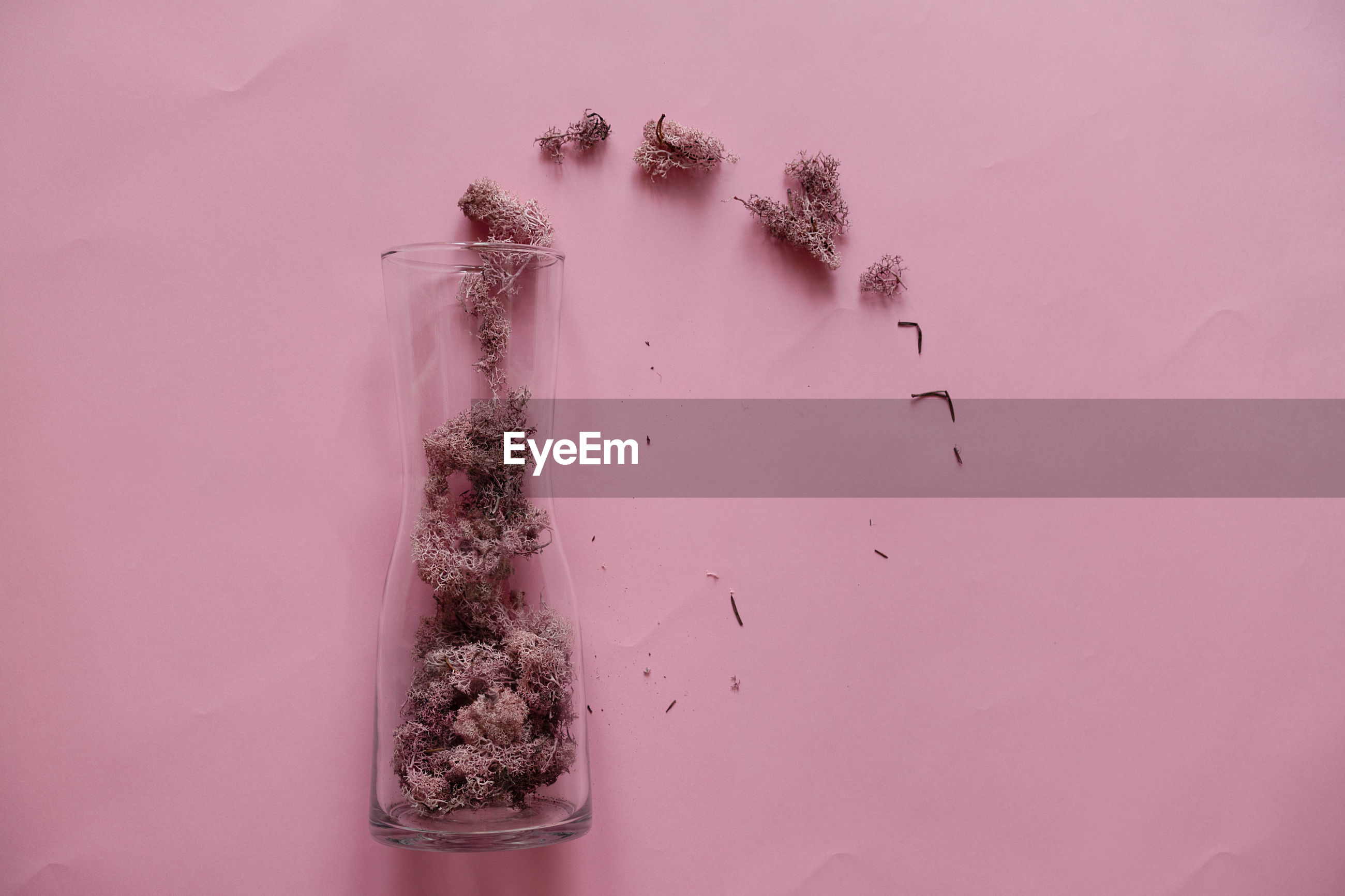 Close-up of dried plant in vase against pink background