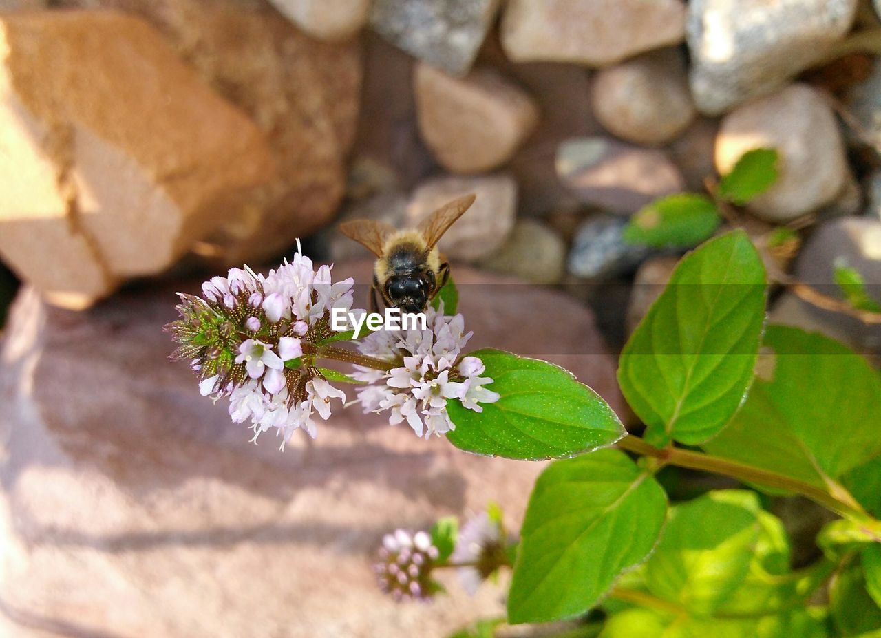 one animal, animal themes, animals in the wild, insect, flower, bee, animal wildlife, nature, no people, plant, outdoors, leaf, growth, day, fragility, petal, freshness, beauty in nature, pollination, close-up, flower head
