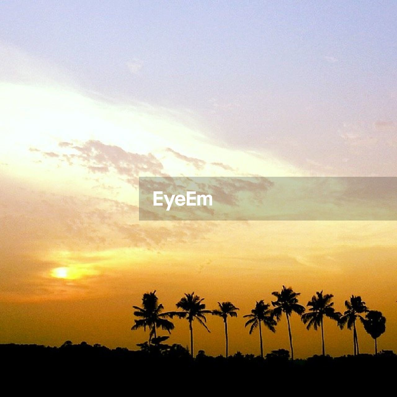 sunset, palm tree, silhouette, tree, beauty in nature, sky, scenics, nature, tranquil scene, orange color, tranquility, no people, cloud - sky, outdoors, growth, beach, day