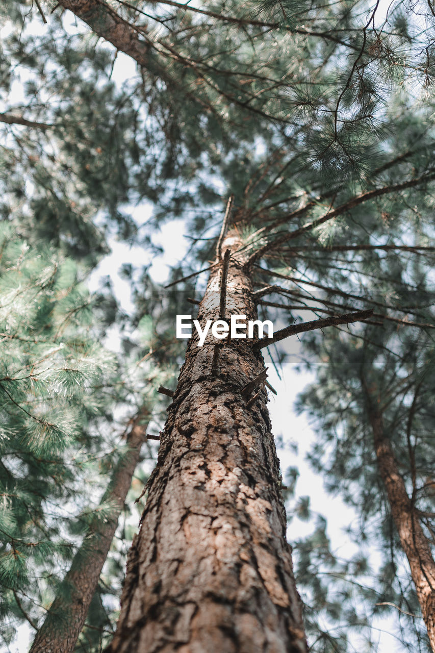 tree, low angle view, tree trunk, trunk, plant, nature, animal, branch, animal wildlife, no people, day, animal themes, animals in the wild, focus on foreground, one animal, growth, outdoors, beauty in nature, forest, close-up, bark, directly below