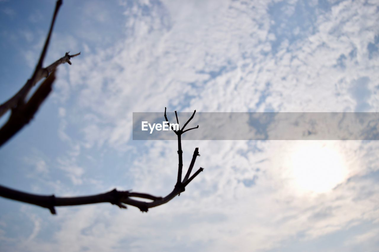 nature, no people, sky, outdoors, day, beauty in nature, close-up, tree