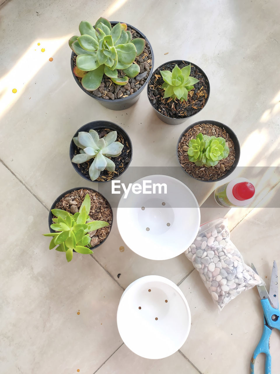 HIGH ANGLE VIEW OF SUCCULENT PLANT IN PLATE ON TABLE