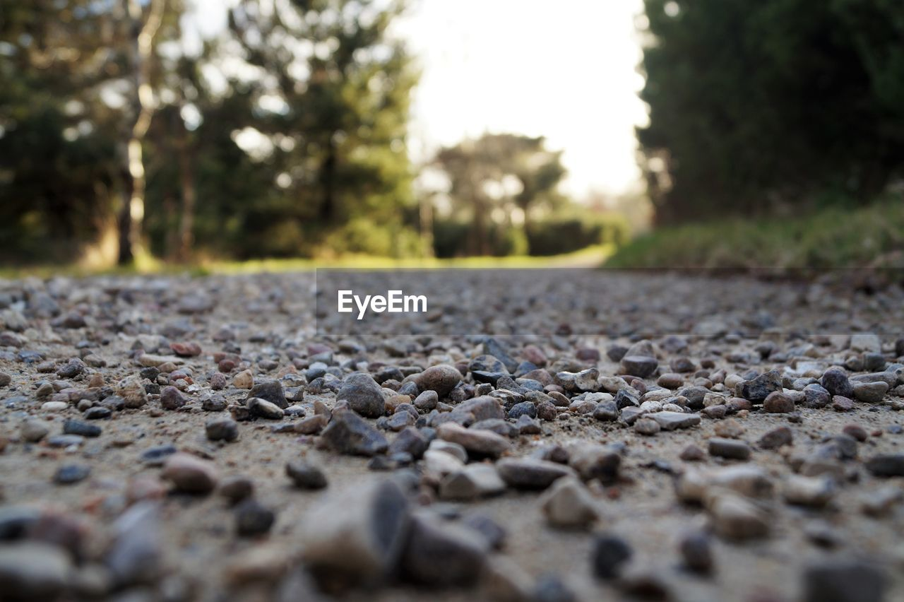 surface level, selective focus, day, no people, outdoors, nature, pebble, the way forward, close-up, road, tree, pebble beach