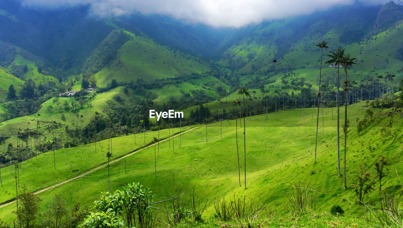Scenic view of cocora valley