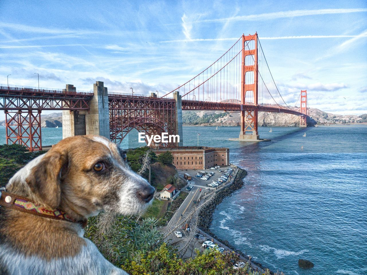 one animal, canine, dog, bridge, pets, bridge - man made structure, domestic animals, architecture, built structure, animal themes, domestic, water, connection, animal, mammal, suspension bridge, cloud - sky, sky, transportation, no people, bay