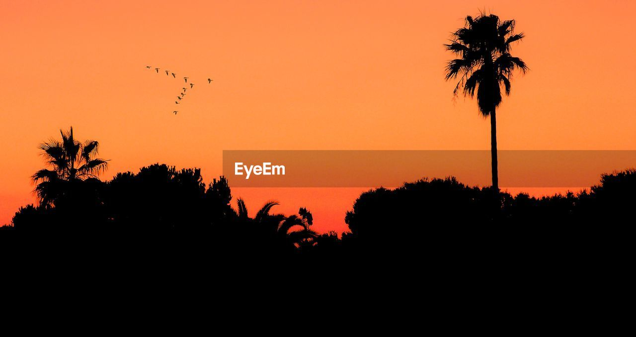 Low angle view of silhouette birds flying over trees against orange sunset sky