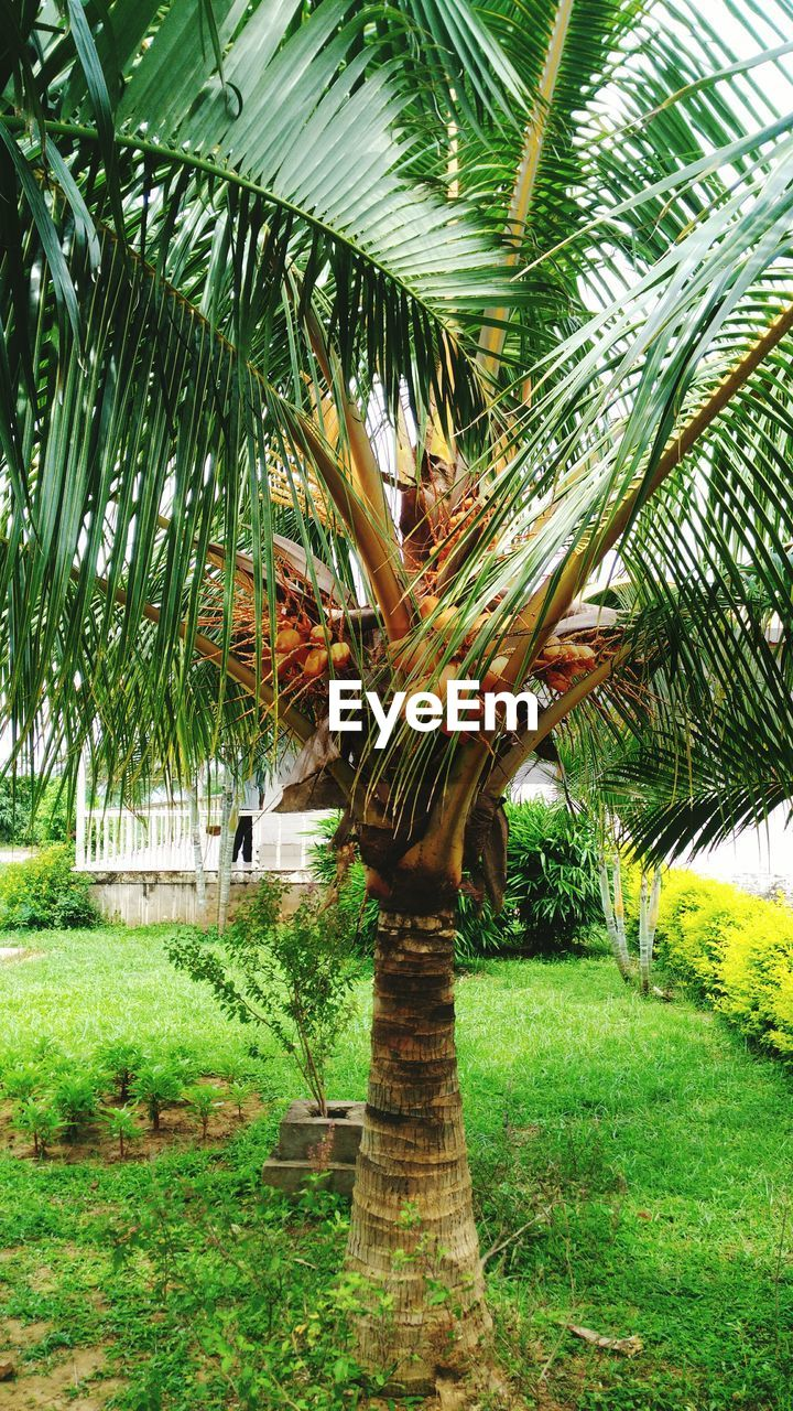 tree, growth, grass, green color, no people, nature, palm tree, day, outdoors, beauty in nature