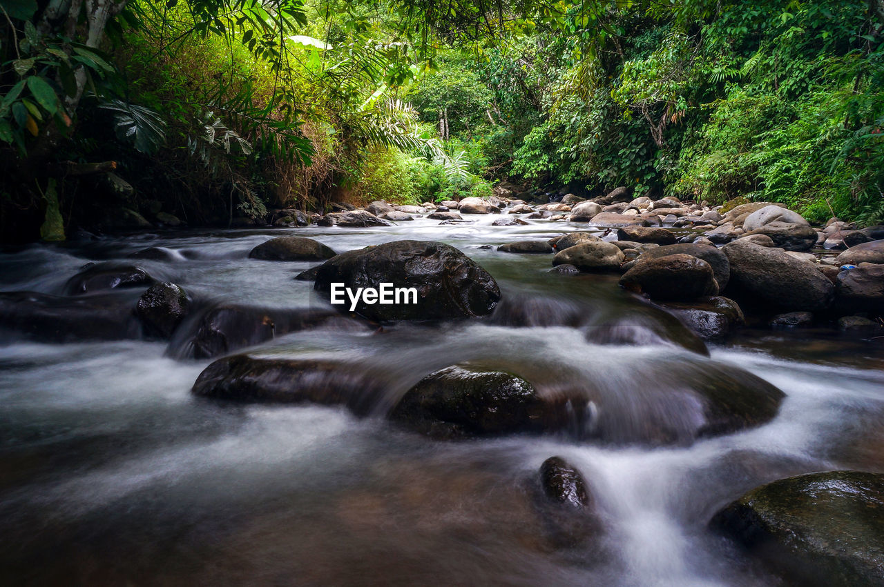 water, tree, forest, plant, scenics - nature, flowing water, long exposure, beauty in nature, motion, blurred motion, land, rock, nature, flowing, no people, river, day, waterfall, rock - object, stream - flowing water, outdoors, rainforest, power in nature