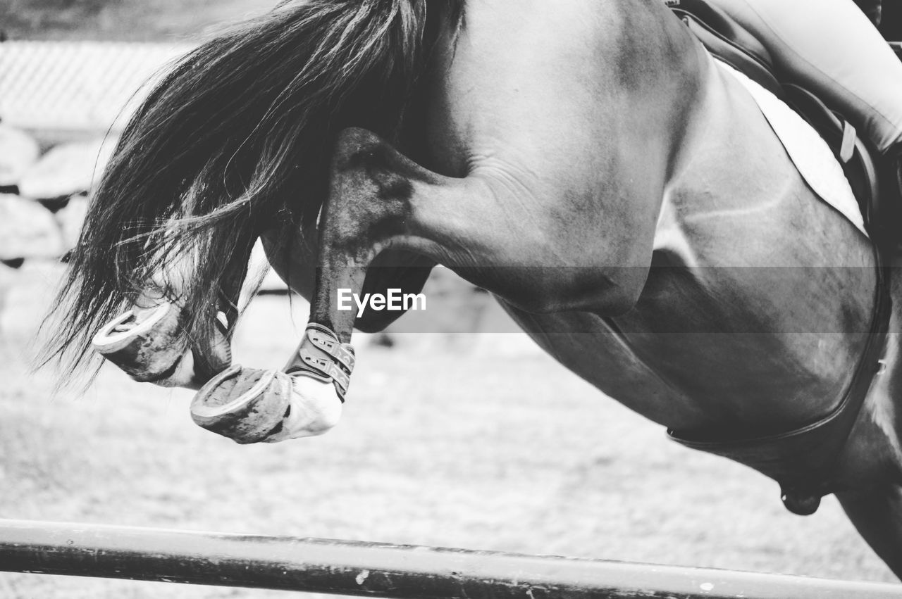 Low Section Of Horse Jumping Over Hurdle