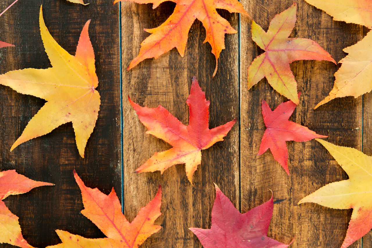 leaf, plant part, autumn, maple leaf, change, orange color, no people, close-up, shape, nature, day, leaves, wood - material, directly above, star shape, red, full frame, outdoors, yellow, maple tree, natural condition