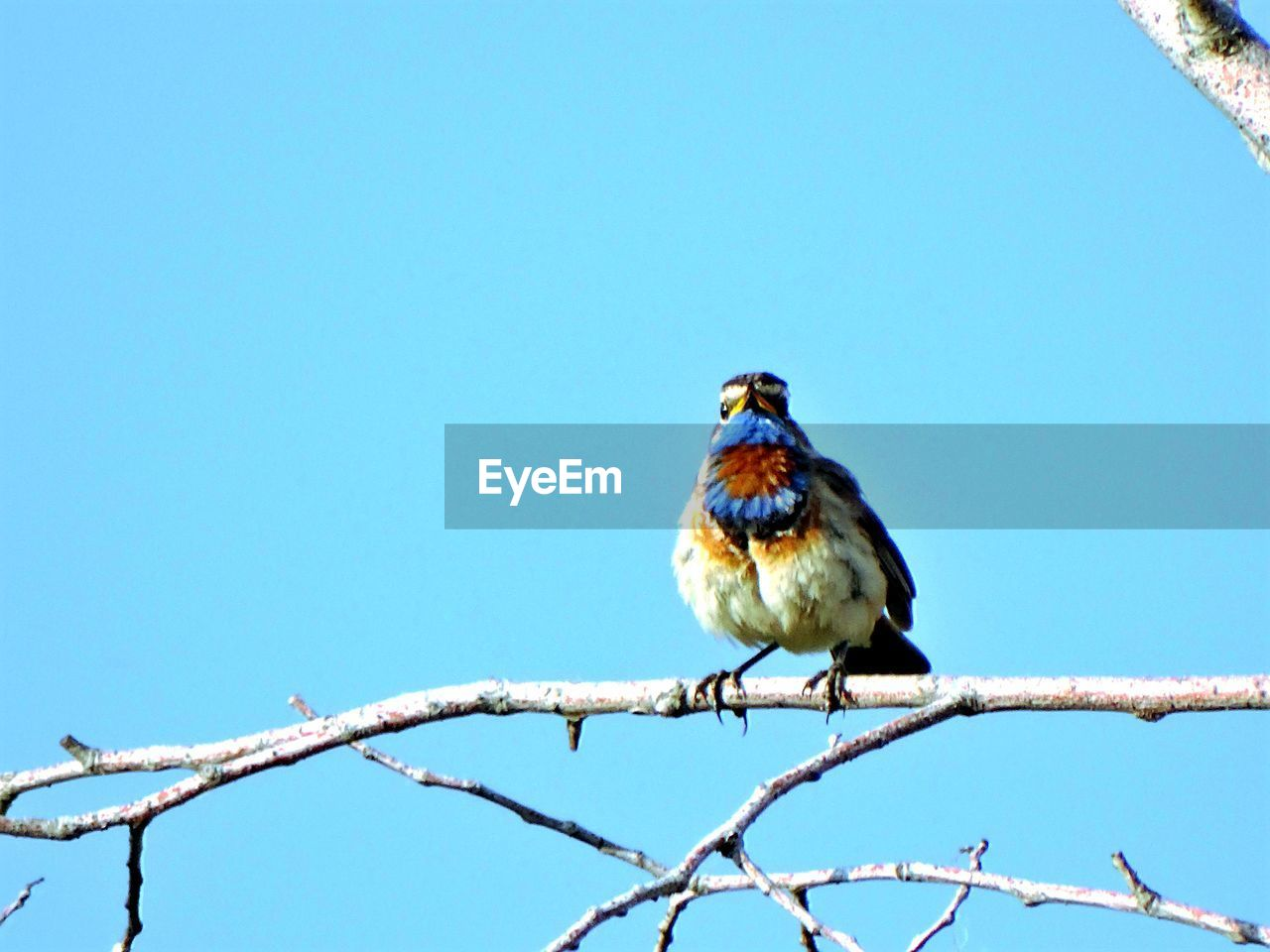 Low Angle View Of Birds Perched Against Clear Blue Sky