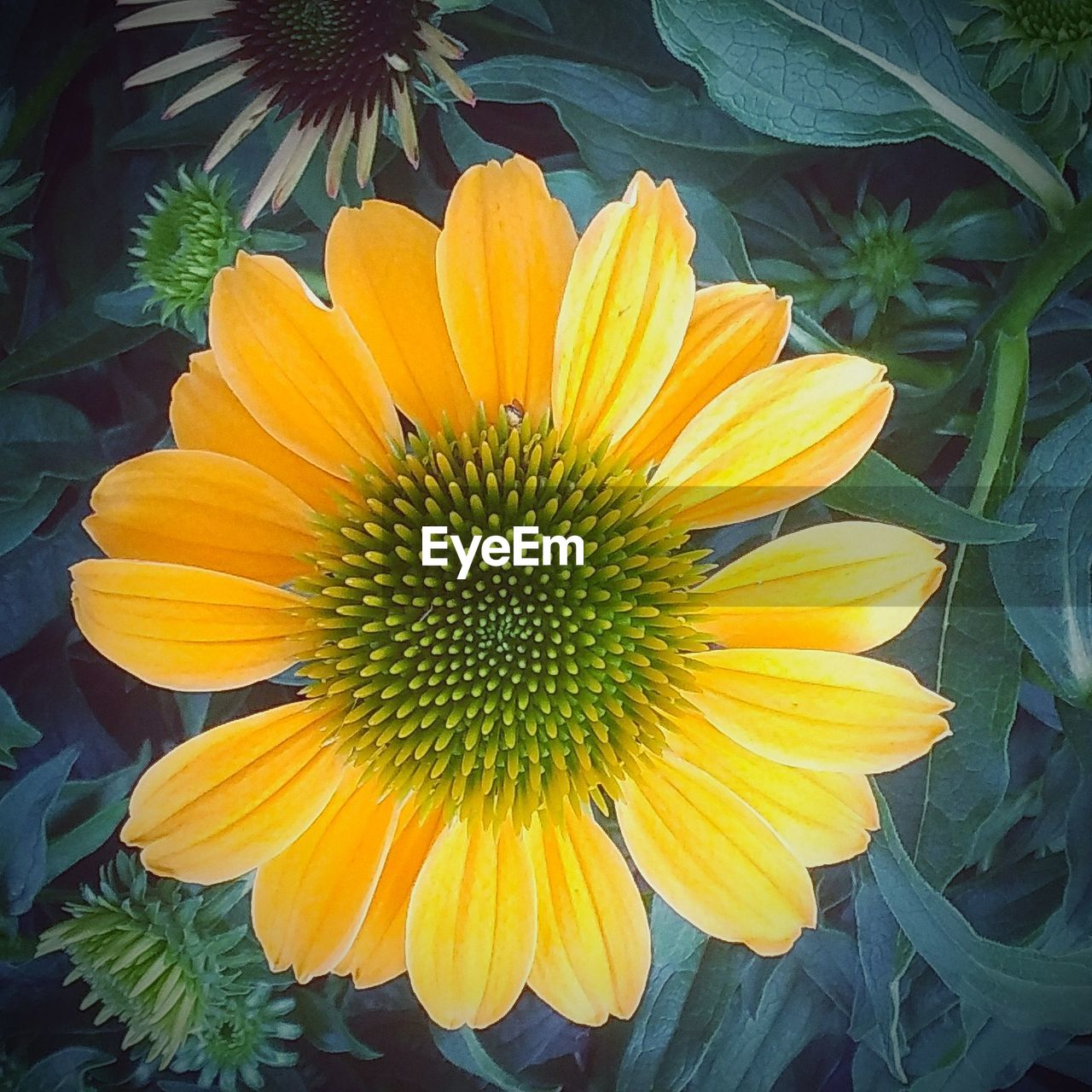 flower, petal, growth, freshness, fragility, beauty in nature, yellow, nature, flower head, blooming, plant, outdoors, day, no people, close-up