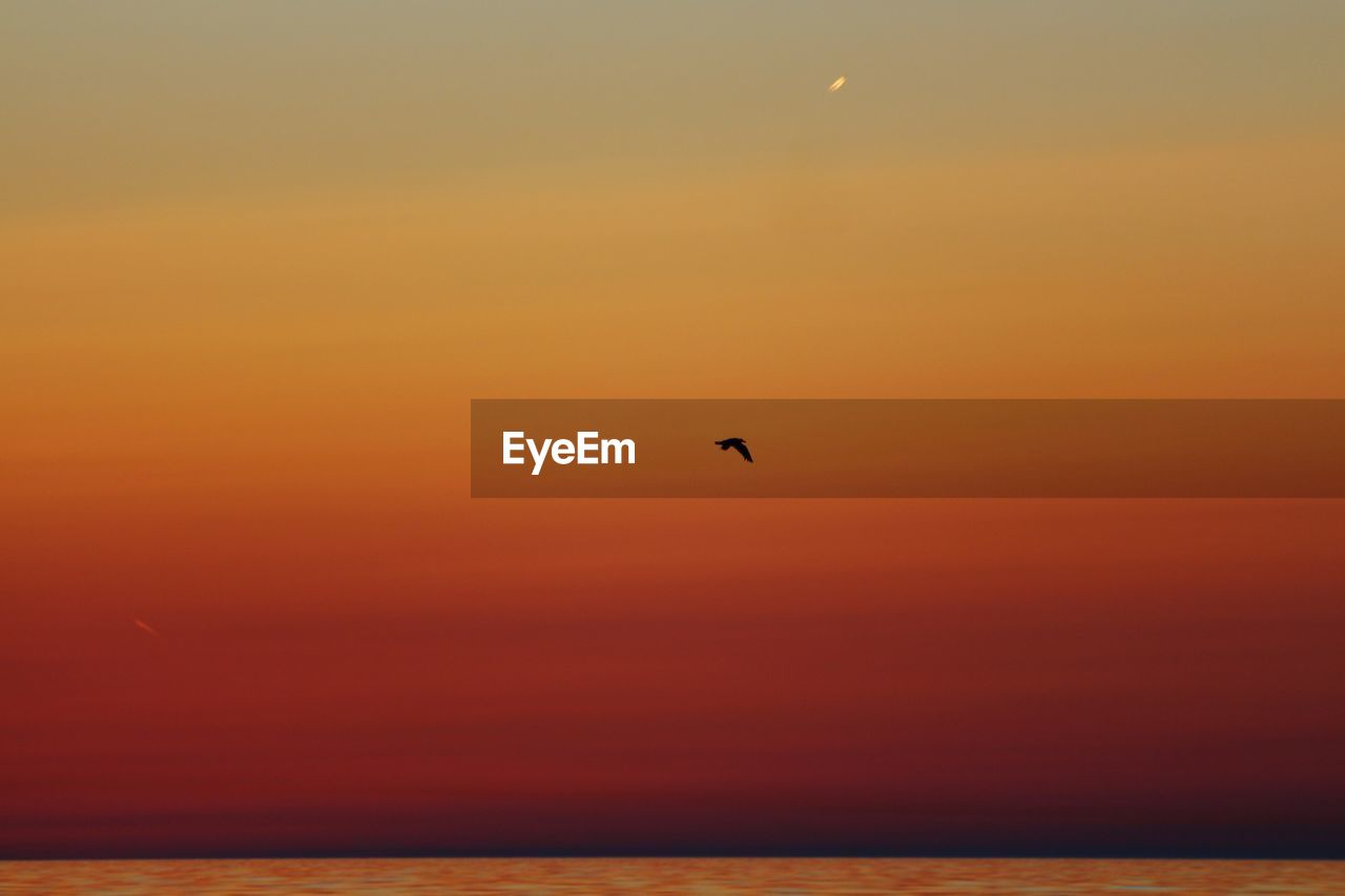 Scenic View Of Bird Flying Over Sea At Sunset