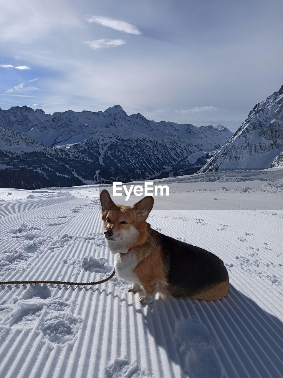 Corgi on snow covered mountain against sky