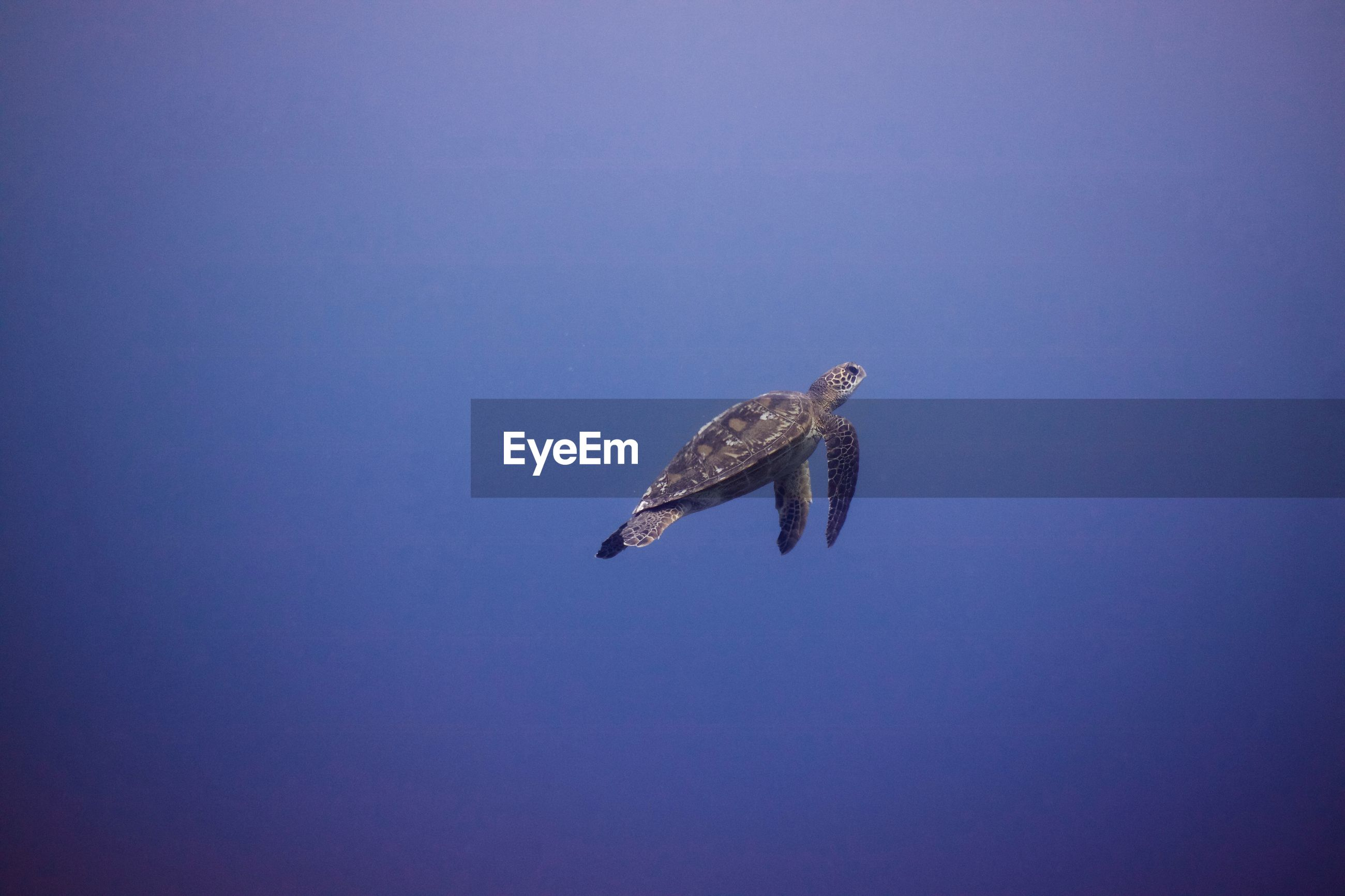 LOW ANGLE VIEW OF EAGLE FLYING