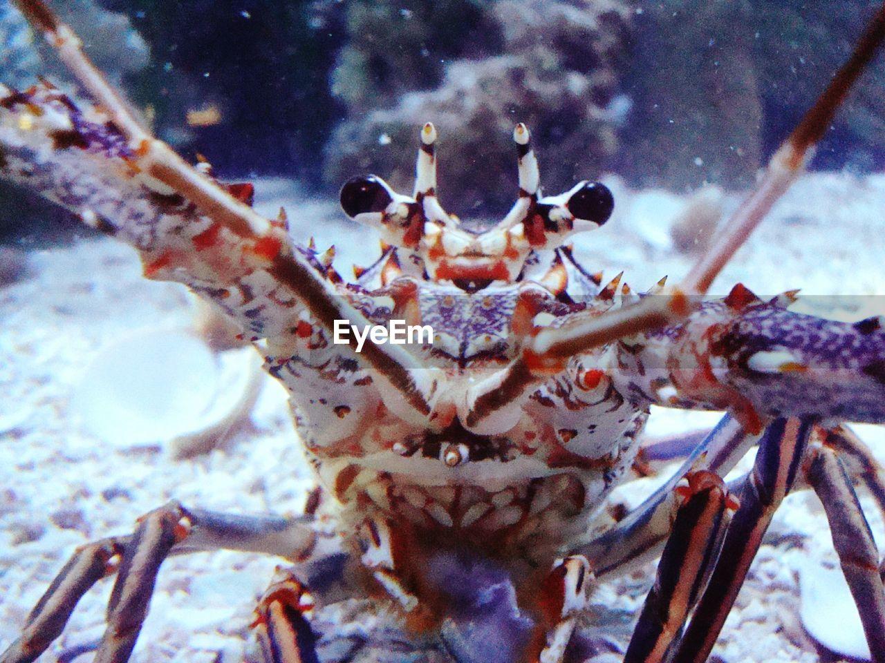 one animal, animal themes, animals in the wild, sea life, animal wildlife, close-up, underwater, no people, undersea, animal leg, nature, day, indoors