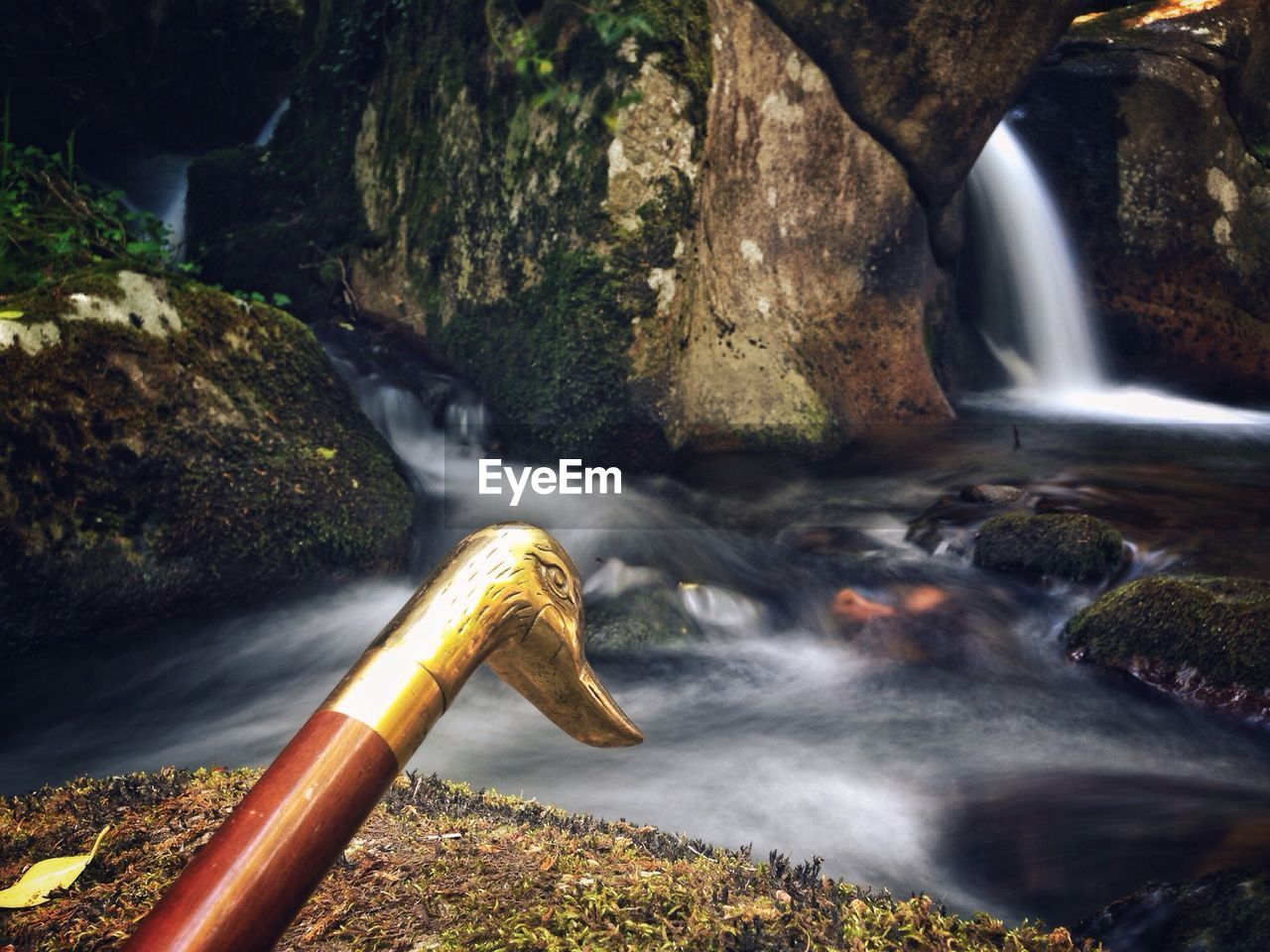 Close-up of walking stick against waterfall in forest