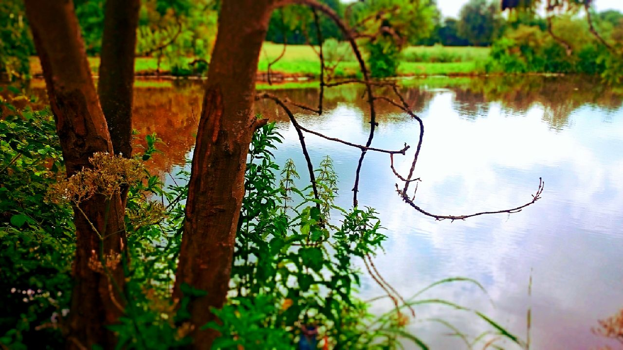 tree, nature, reflection, water, beauty in nature, outdoors, tranquil scene, lake, tranquility, growth, day, no people, green color, scenics, plant, forest, branch, animal themes, bird