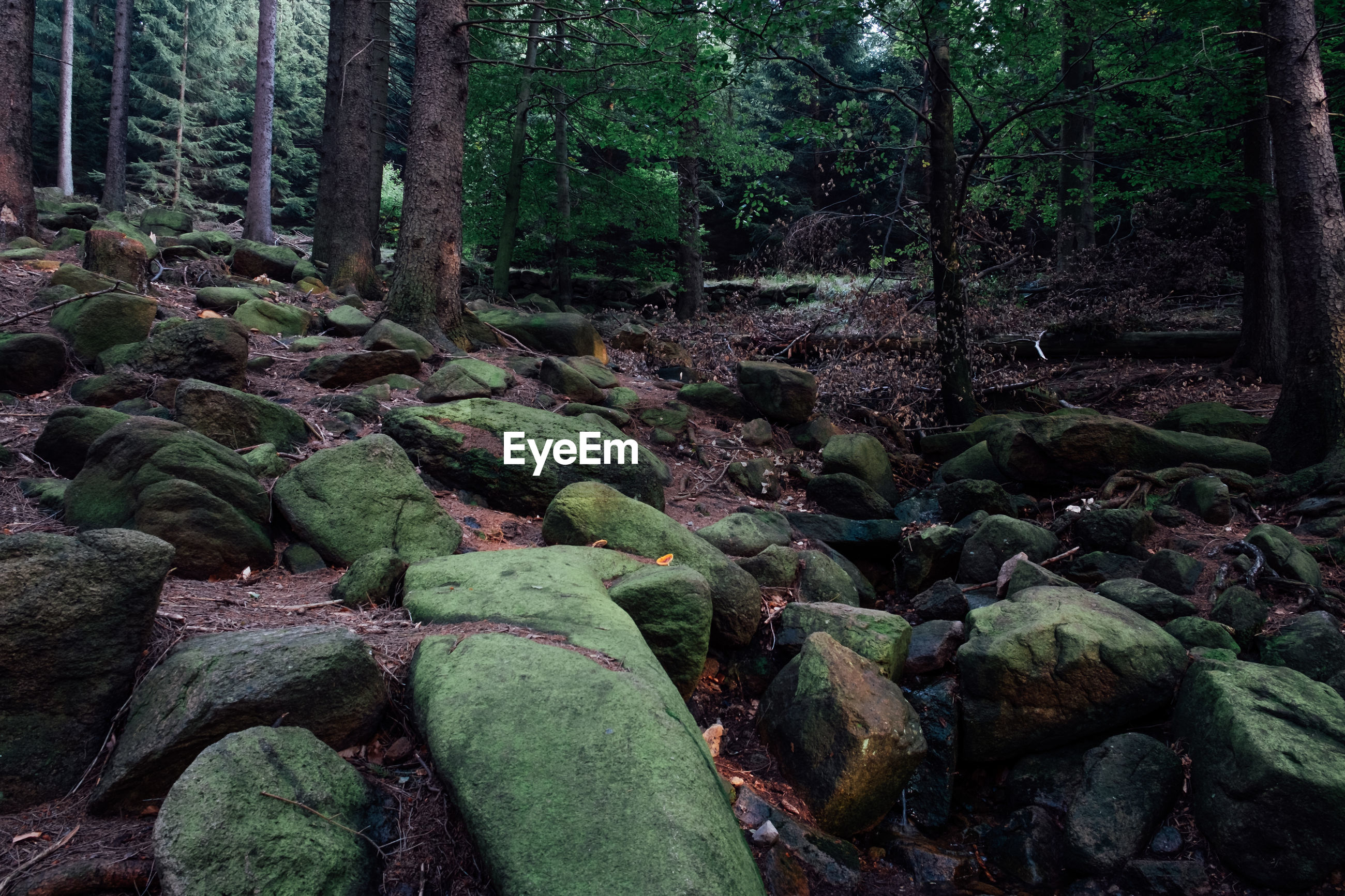 PLANTS GROWING BY ROCKS IN FOREST