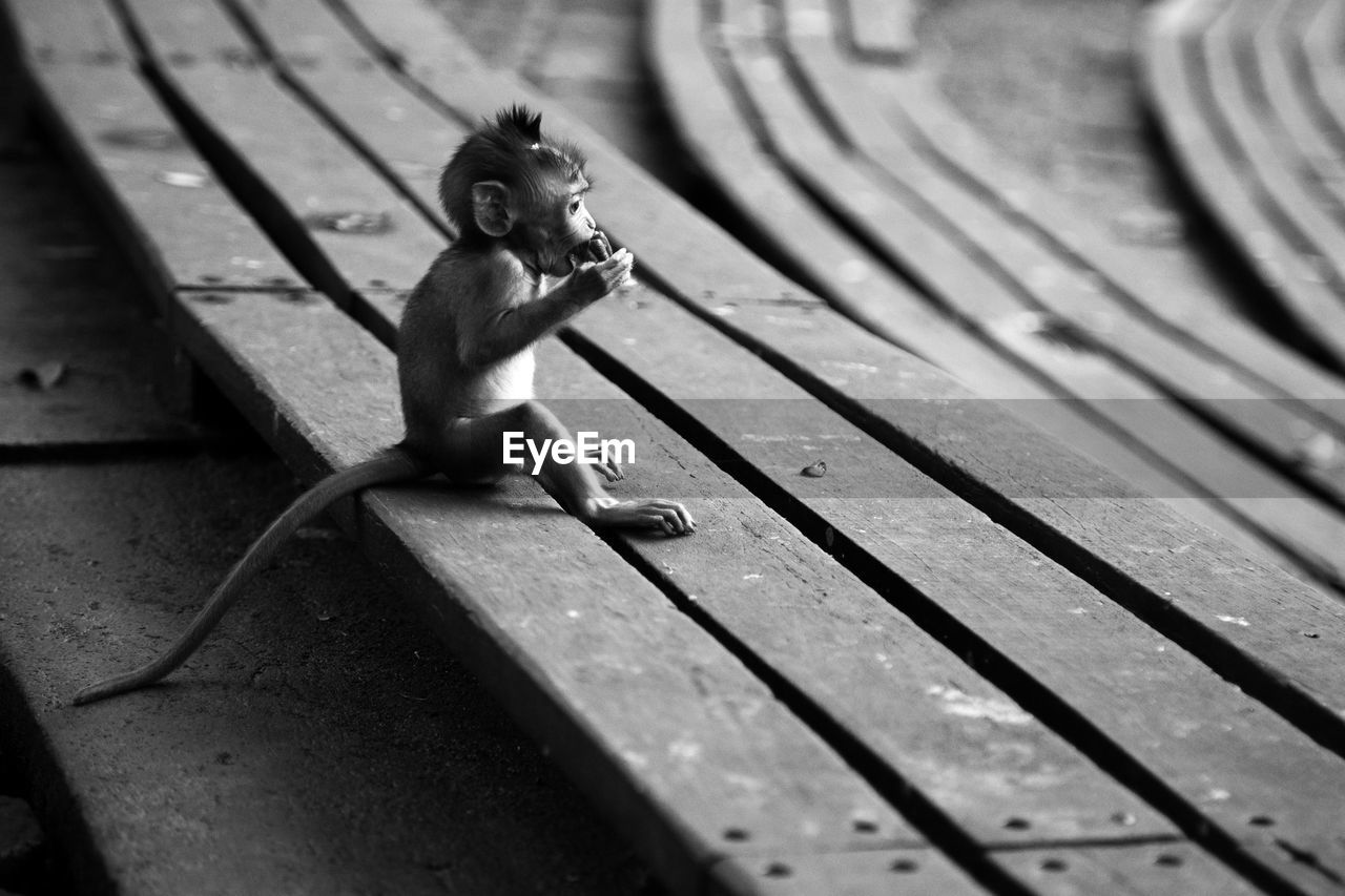 no people, representation, day, selective focus, animal, animal themes, toy, wood - material, primate, animal wildlife, full length, mammal, one animal, monkey, sitting, high angle view, outdoors, animal representation, vertebrate