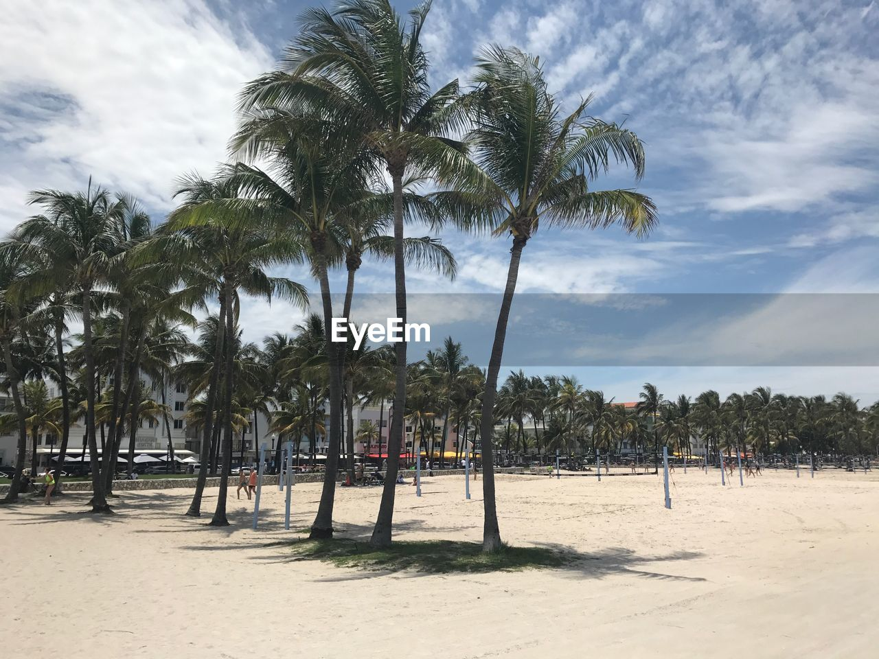 tropical climate, tree, palm tree, plant, beach, land, sky, sand, cloud - sky, nature, growth, beauty in nature, day, outdoors, sunlight, tranquility, scenics - nature, sea, coconut palm tree, tranquil scene, tropical tree, palm leaf, treelined