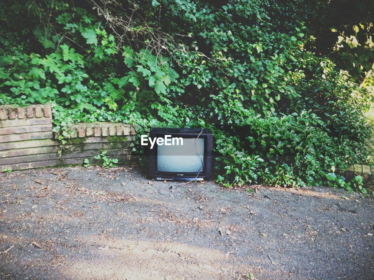 View of an abandoned television against plants