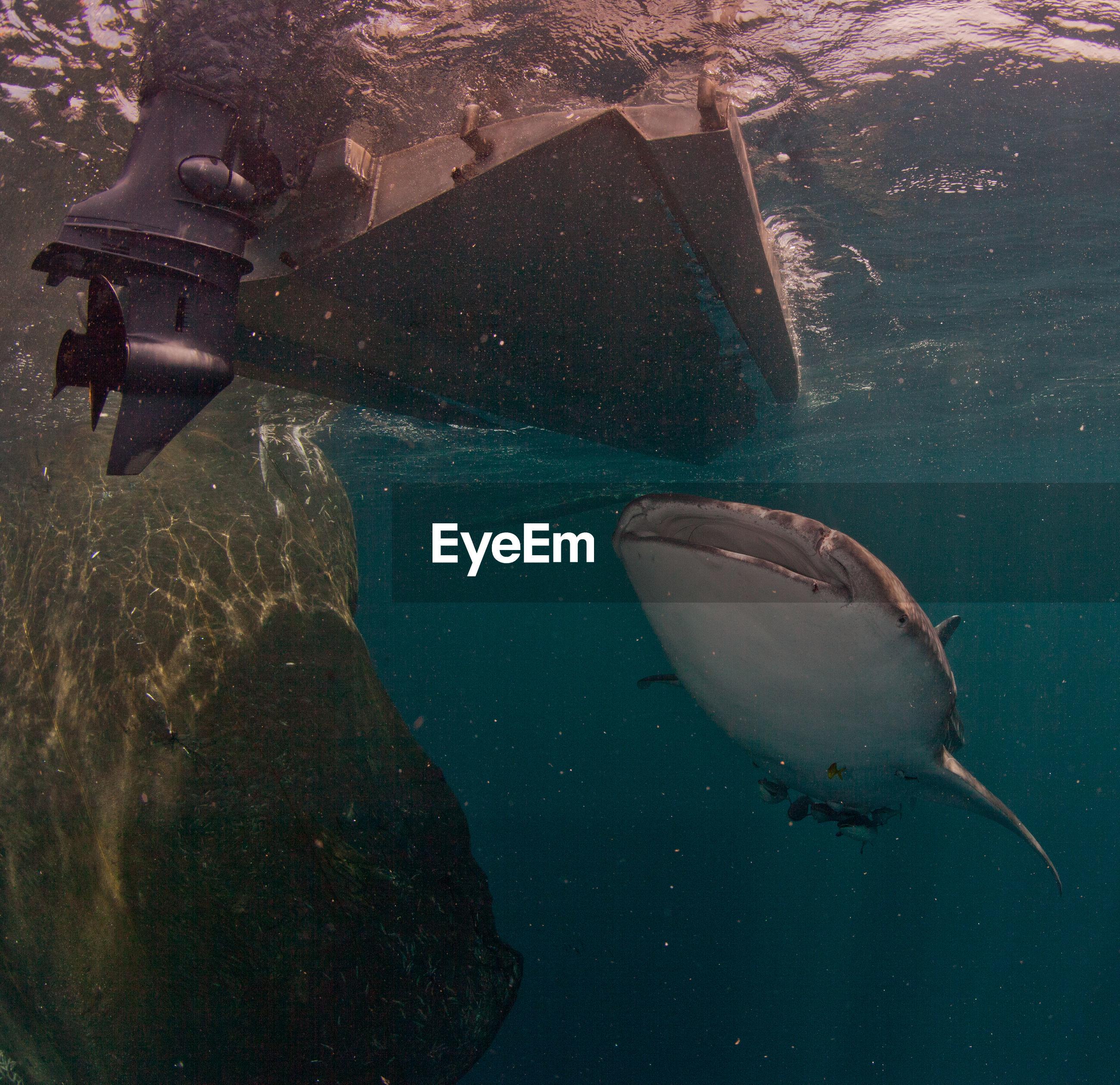 Fish swimming below boat undersea