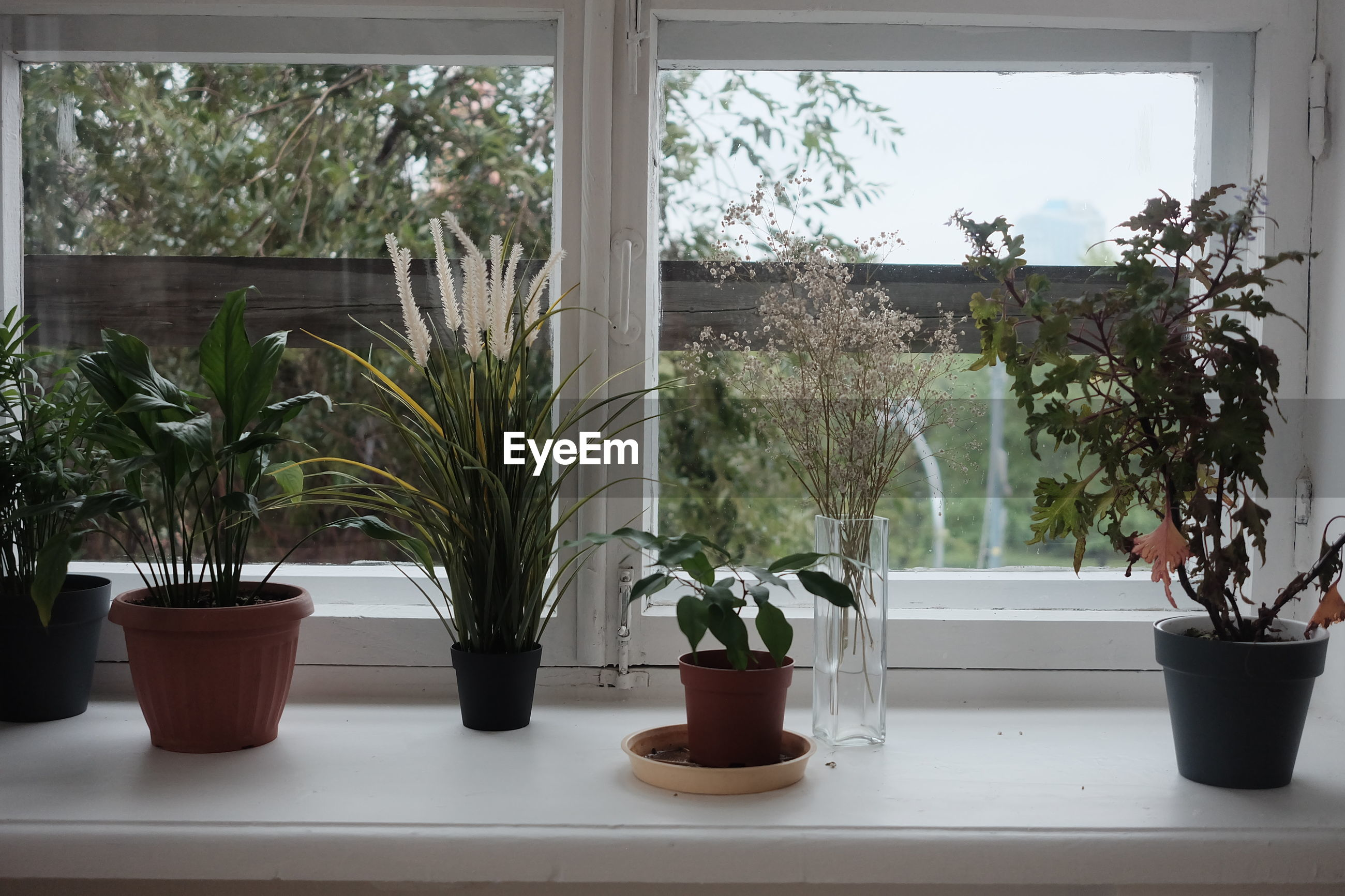 POTTED PLANTS ON WINDOW SILL IN POT