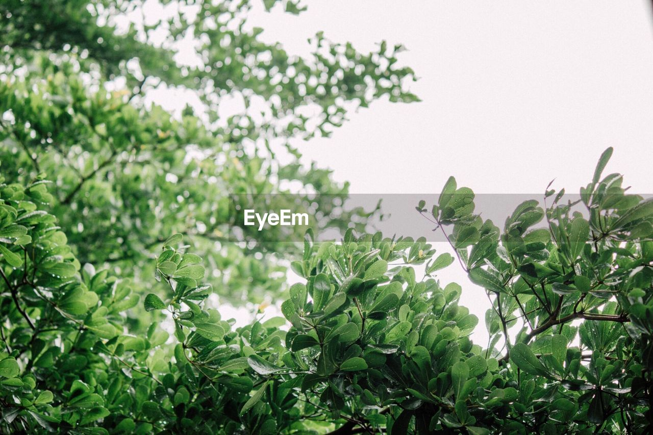 growth, plant, green color, nature, leaf, no people, outdoors, beauty in nature, freshness, day, tree, close-up