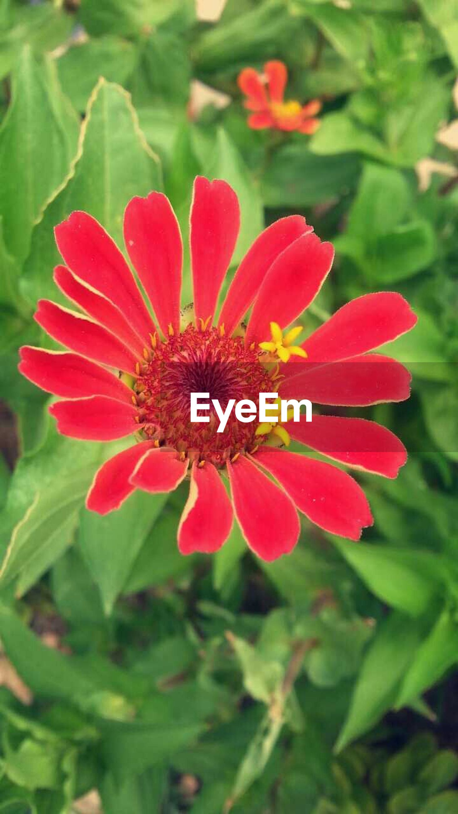 flower, freshness, petal, flower head, fragility, growth, red, beauty in nature, close-up, blooming, plant, focus on foreground, nature, pollen, single flower, in bloom, leaf, stamen, park - man made space, day