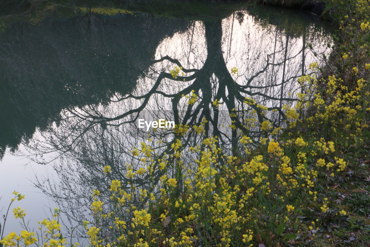tree, nature, growth, outdoors, beauty in nature, no people, day, yellow, flower, plant, branch, water