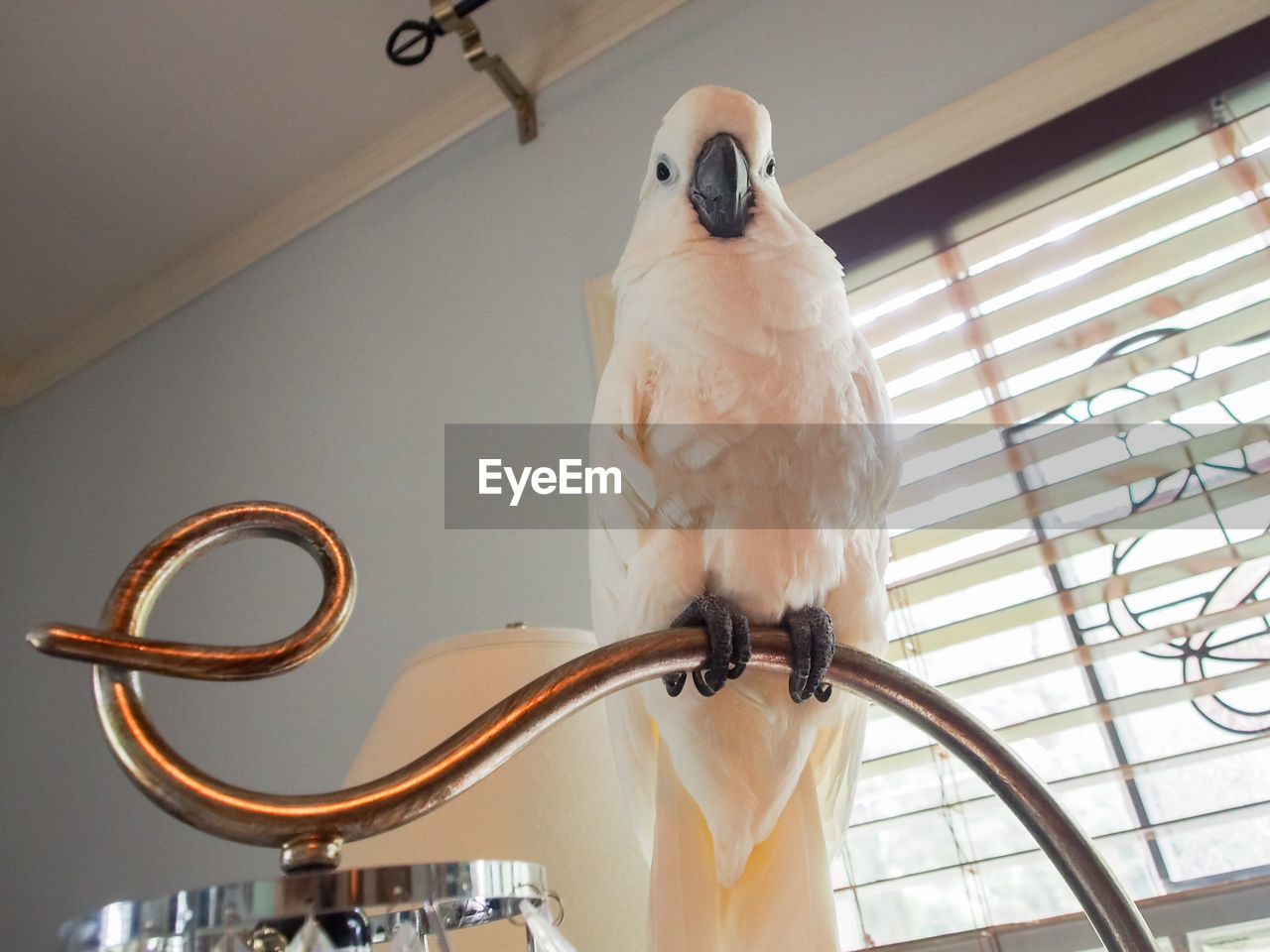 bird, animal themes, low angle view, animal, indoors, vertebrate, one animal, animal wildlife, perching, no people, animals in the wild, parrot, metal, day, close-up, home interior, focus on foreground, ceiling, parakeet