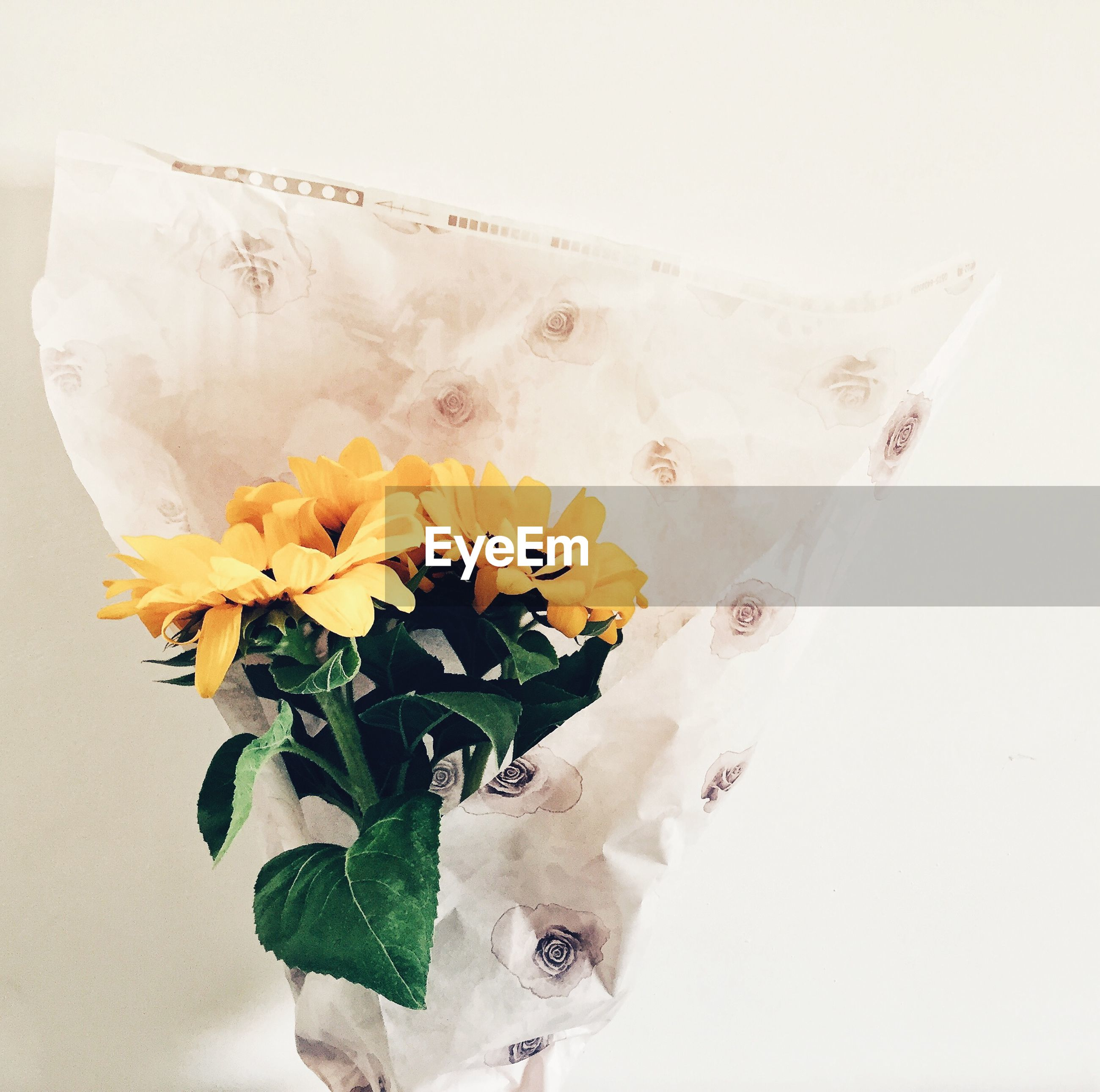 Close-up of sunflowers bouquet against white wall