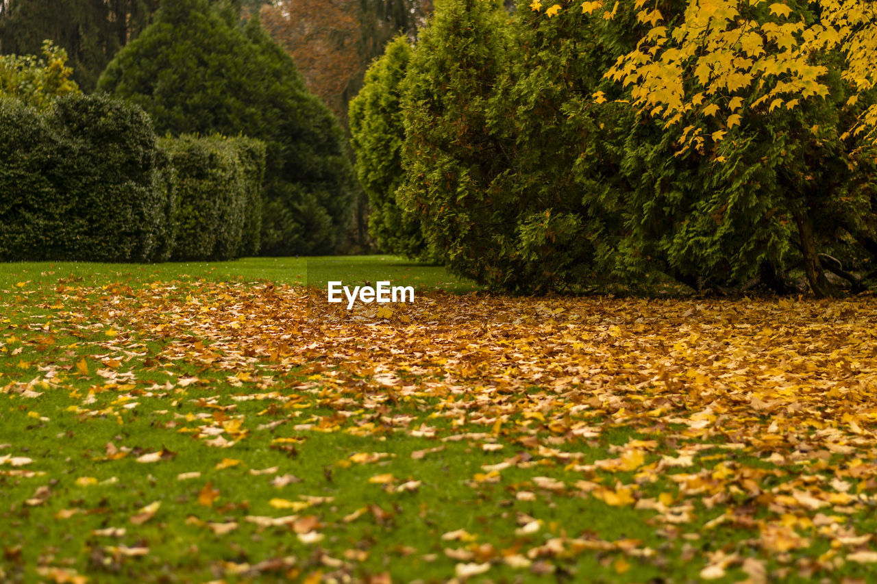 nature, tree, autumn, leaf, beauty in nature, scenics, tranquility, outdoors, tranquil scene, day, growth, landscape, no people, lush foliage, field, plant, yellow, grass, flower
