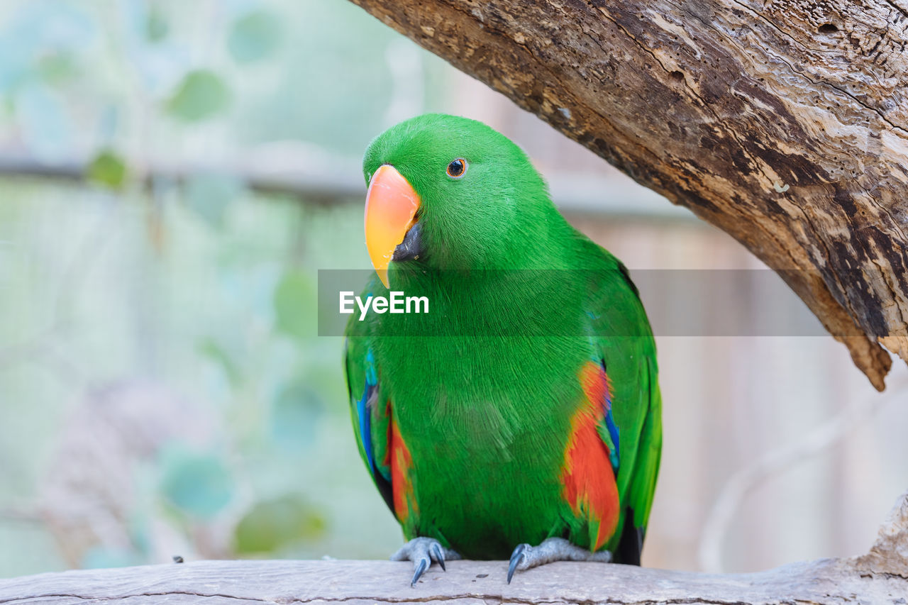 animal themes, animals in the wild, vertebrate, animal wildlife, animal, bird, perching, focus on foreground, one animal, green color, close-up, tree, no people, day, nature, branch, parrot, wood - material, outdoors, beak, rainbow lorikeet