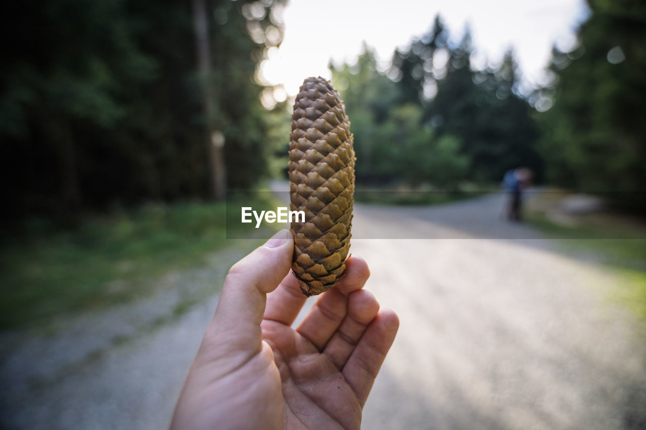 human hand, hand, one person, holding, human body part, focus on foreground, real people, personal perspective, day, unrecognizable person, close-up, nature, finger, lifestyles, human finger, outdoors, plant, leisure activity, cone, human limb