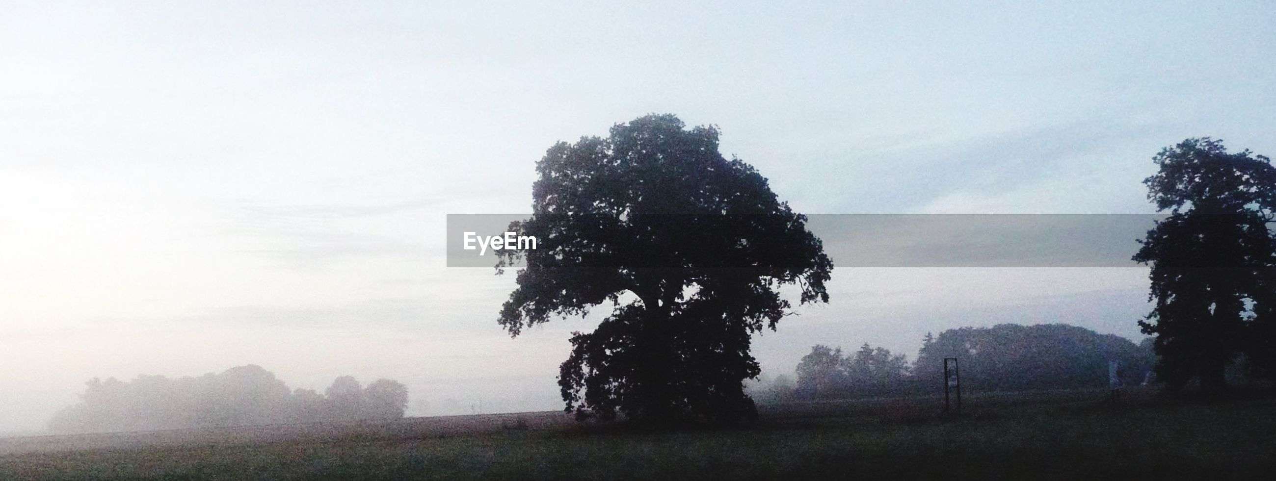 tree, sky, tranquility, tranquil scene, field, landscape, silhouette, nature, growth, beauty in nature, grass, scenics, clear sky, copy space, outdoors, day, bare tree, no people, non-urban scene