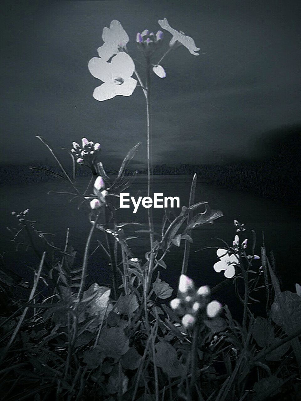 flower, growth, plant, nature, petal, spring, blooming, no people, night, fragility, close-up, outdoors