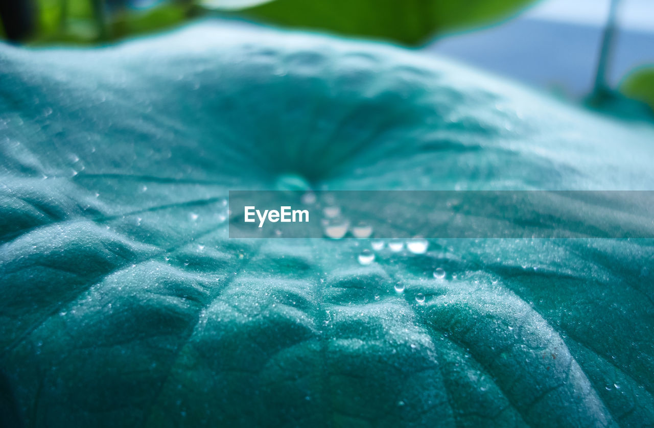 drop, water, leaf, wet, nature, close-up, purity, green color, beauty in nature, freshness, fragility, no people, day, outdoors