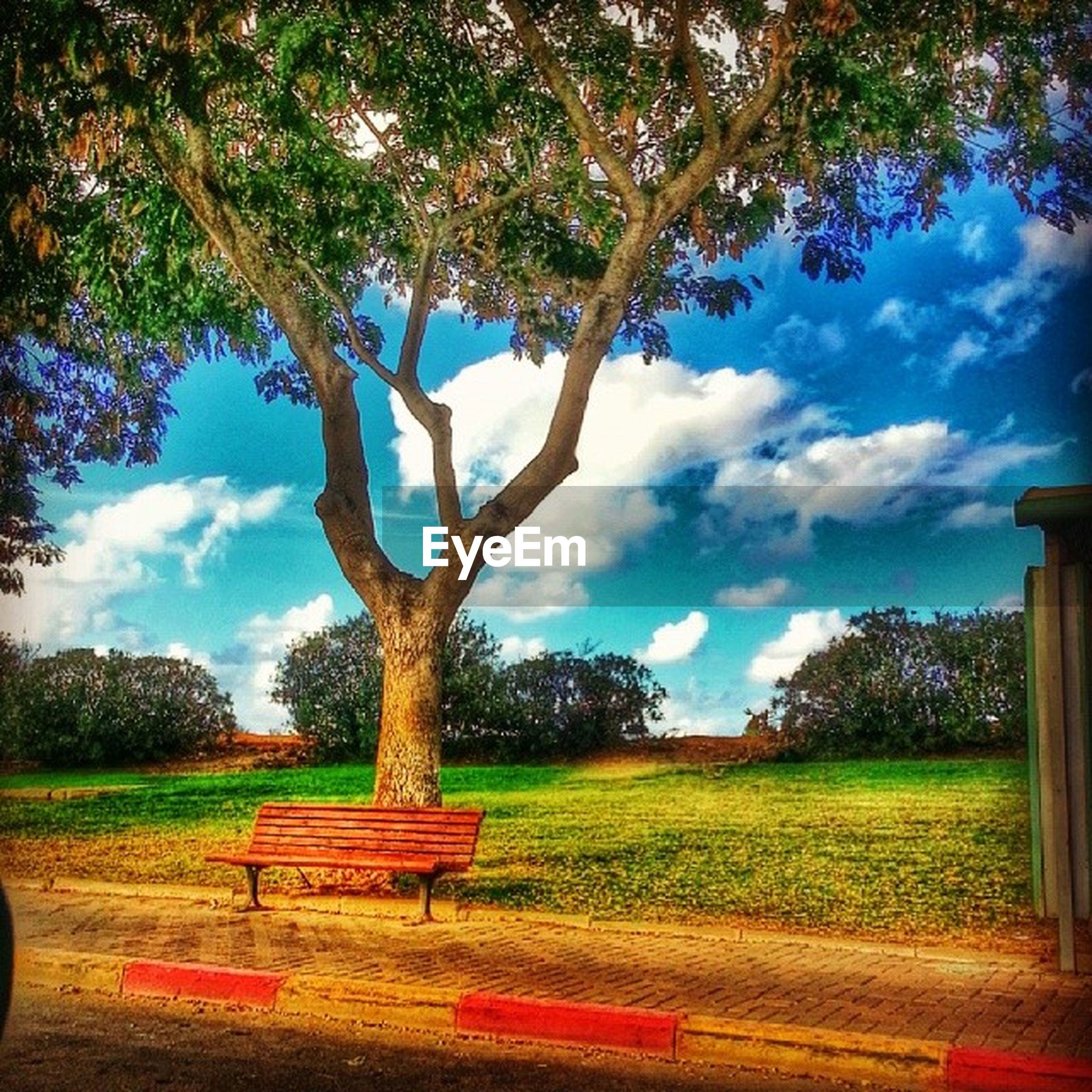 tree, grass, bench, tranquility, sky, field, tranquil scene, park - man made space, nature, growth, absence, empty, landscape, beauty in nature, scenics, park bench, sunlight, branch, cloud - sky, tree trunk