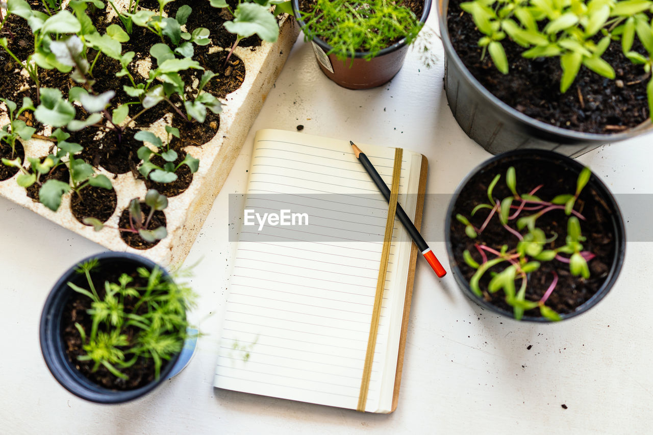 High angle view of potted plants and notepad on table